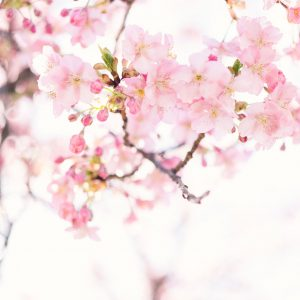 Intro to TCM: Spring